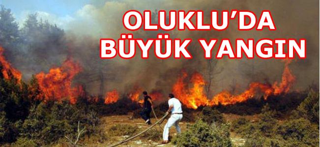 Oluklu'da Büyük Orman Yangını