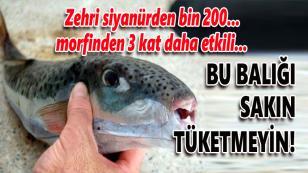 Bu balığı sakın tüketmeyin