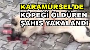 Köpeği Öldüren Şahıs Yakalandı