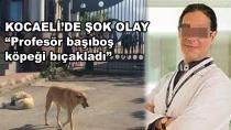 Kocaeli'de Şok Olay ''Profesör başıboş köpeği bıçakladı''