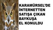 Karamürsel'de Satılmak İstenen Baykuş Yakalandı