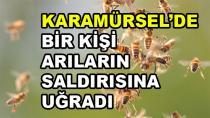 Karamürsel'de Bir Kişi Arıların Saldırısına Uğradı